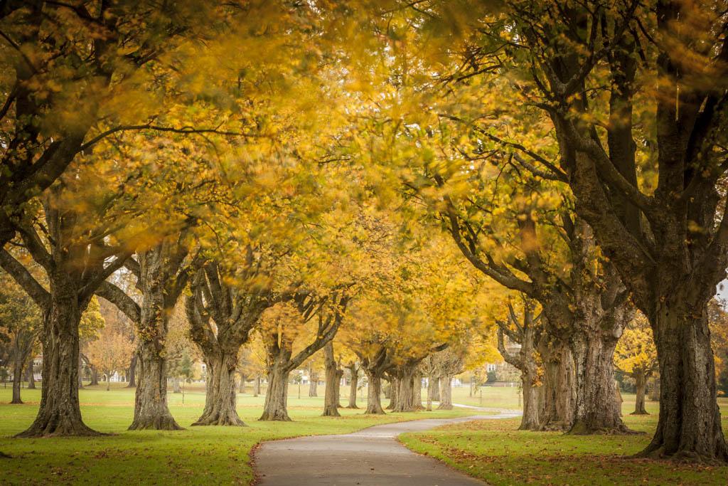 autumn portrait photography